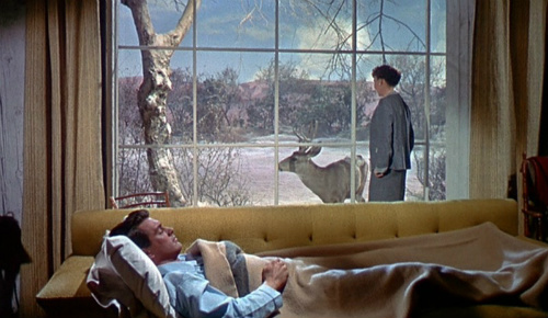 Rock Hudson and Jane Wyman in All that Heaven Allows
